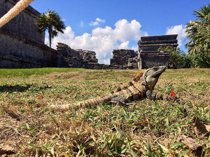 10 Animais que você só encontrará no México — seu habitat natural