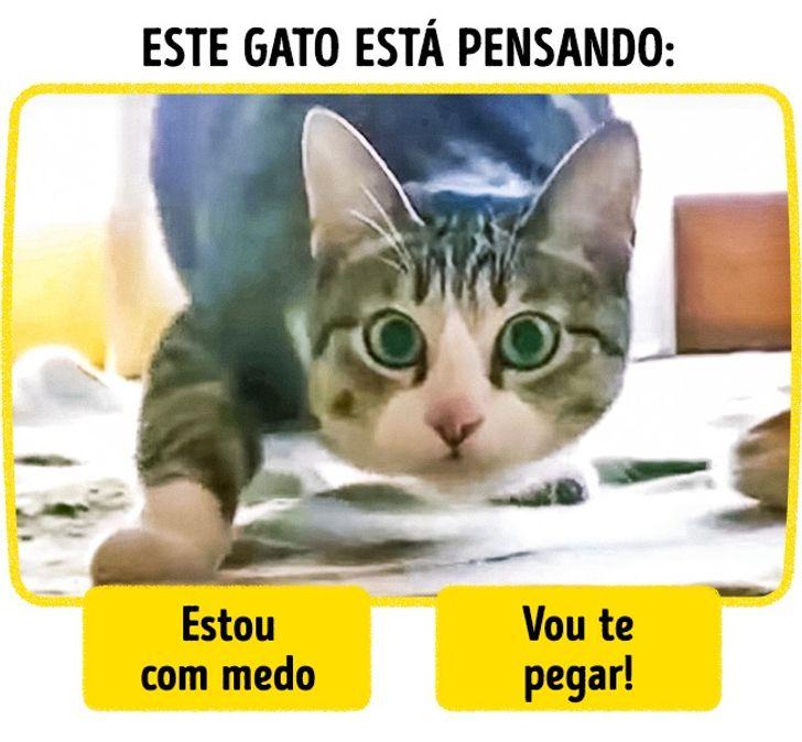 idioma felino pdf download grátis