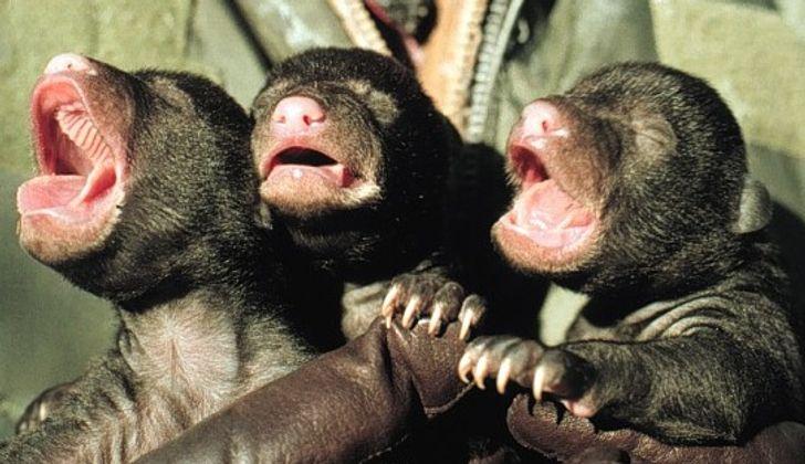 19 Animais recém-nascidos que mostram que a doçura começa cedo