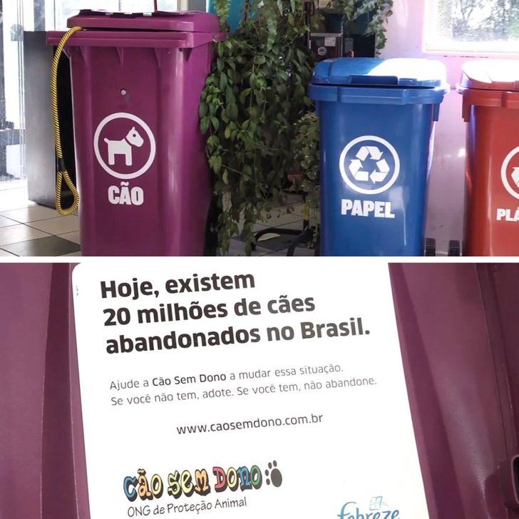 10 Cidades e instituições brasileiras com lindas campanhas contra o abandono de animais