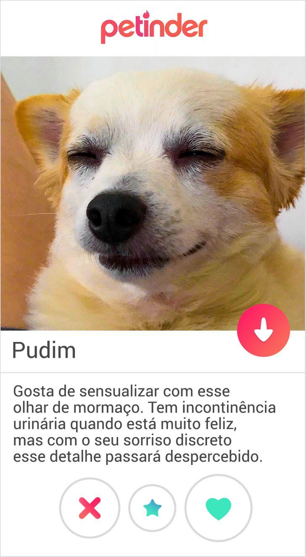 Internautas decidem imaginar como seria o perfil do Tinder de seus pets e o resultado é hilário