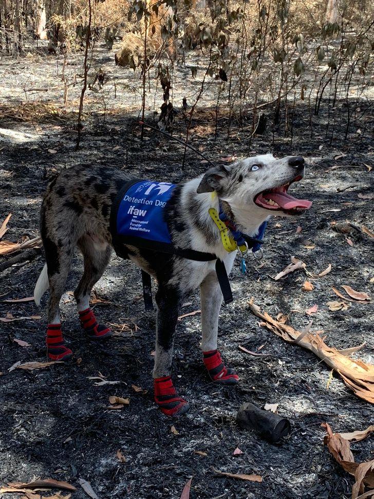 15 Histórias que provam que os cães são verdadeiros heróis sem capa