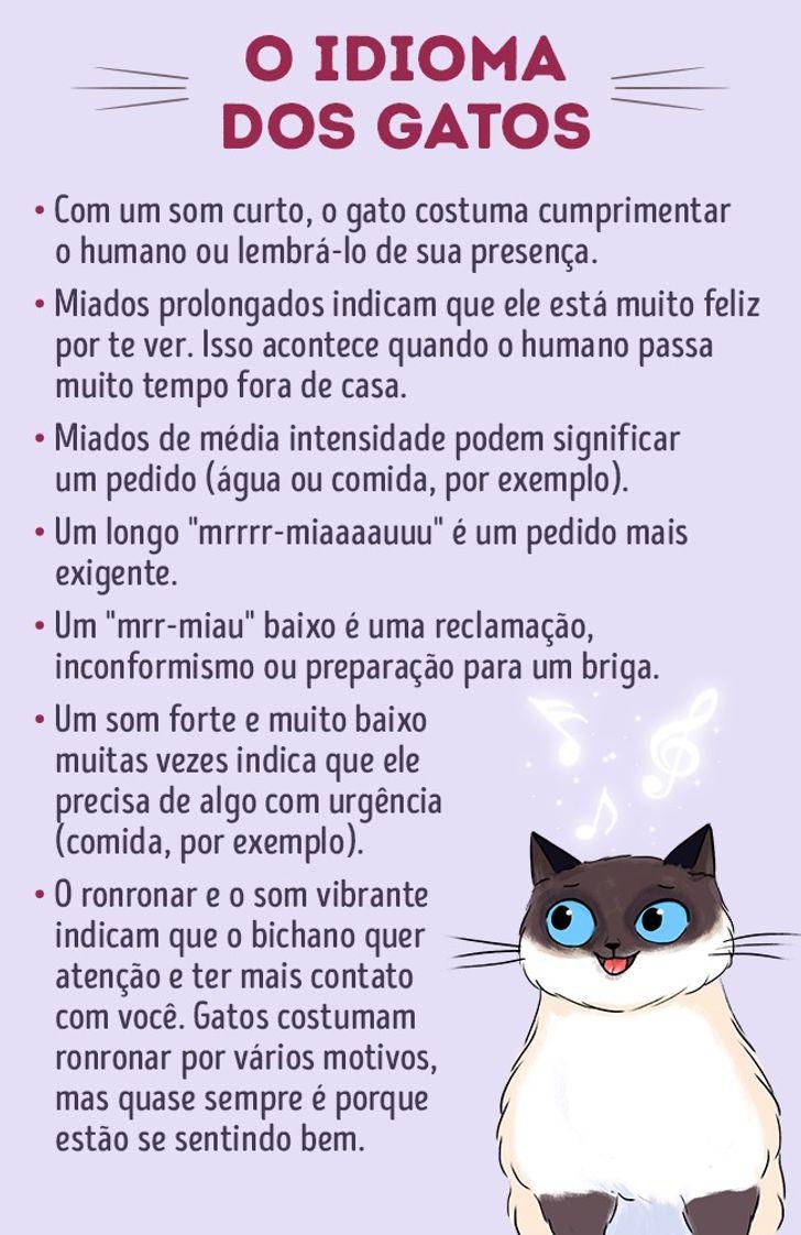 idioma felino amazon