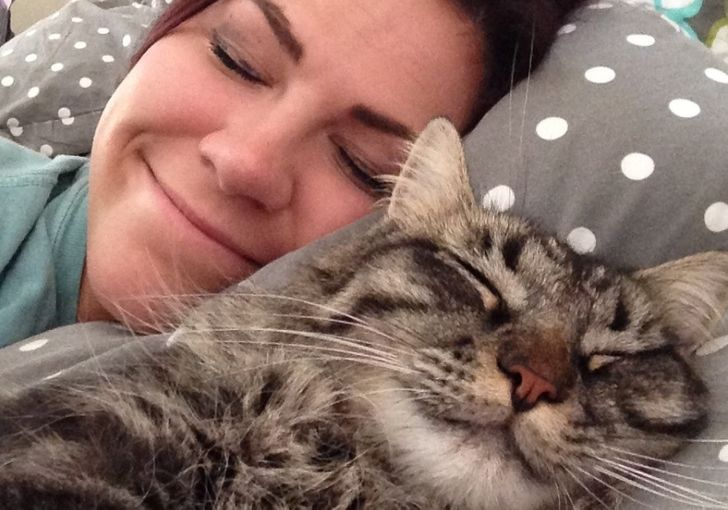 Os gatos podem se apegar aos seres humanos ainda mais do que os cães, diz a ciência