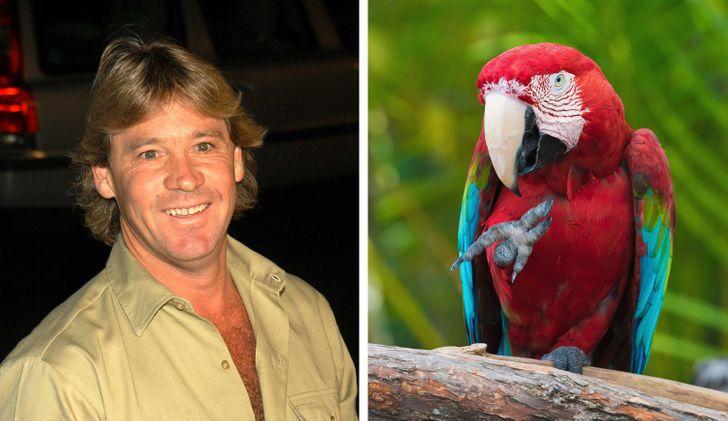 12 Provas de que Steve Irwin era um ser humano único