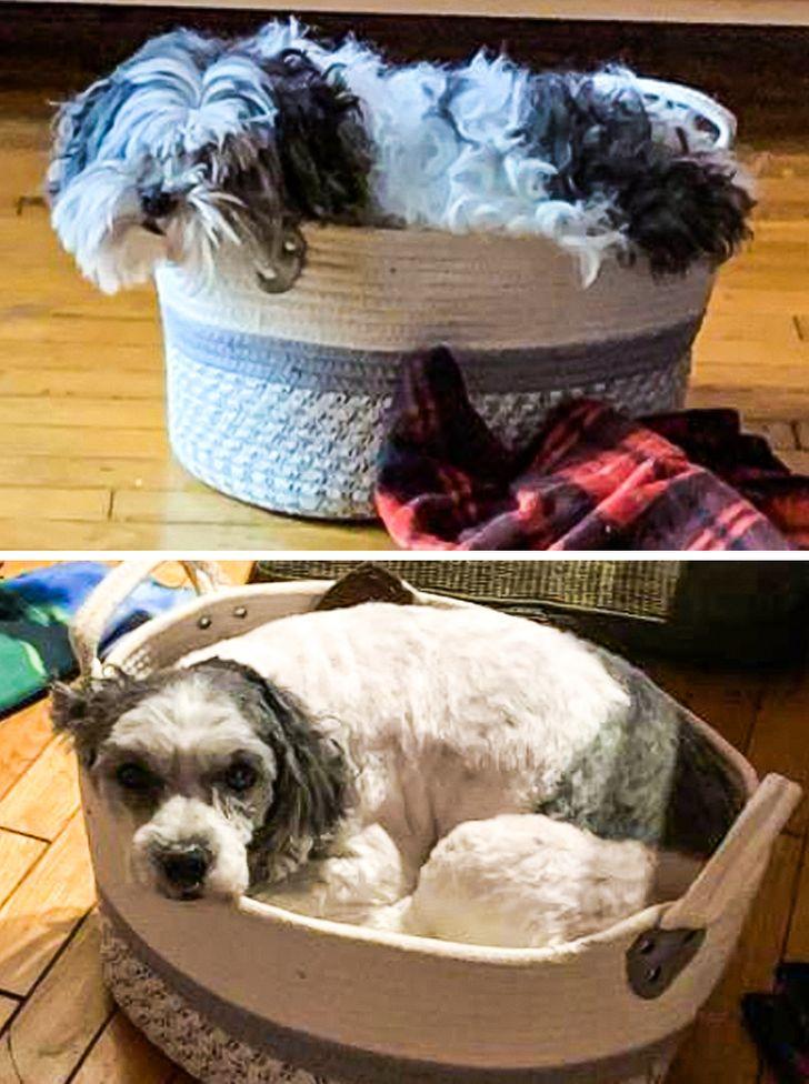 20+ Cachorrinhos que foram para o pet shop e voltaram completamente diferentes