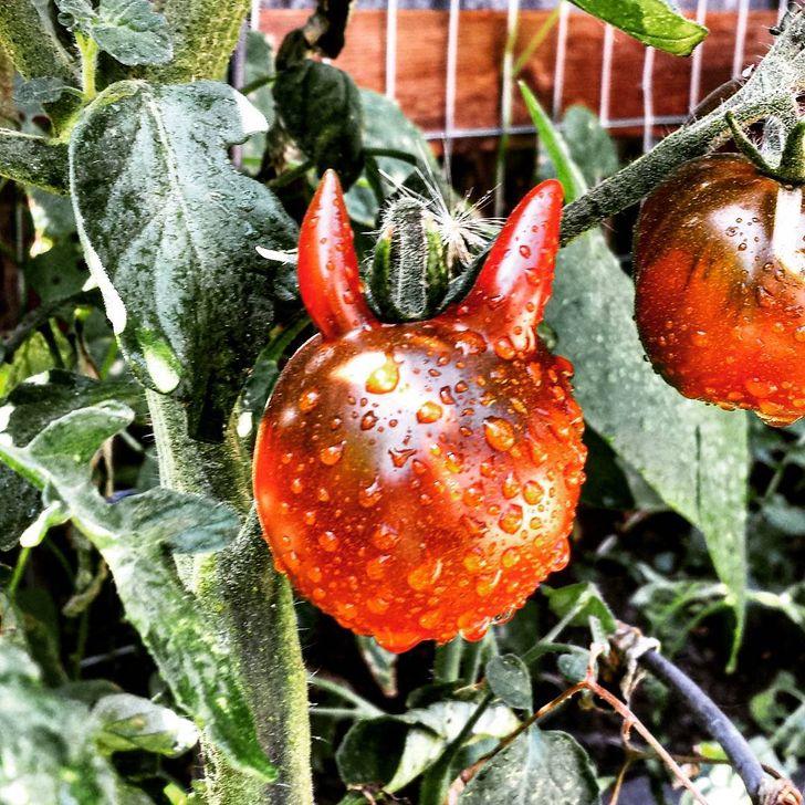 25+ Frutas e legumes que foram presenteados pela natureza com formatos muito engraçados