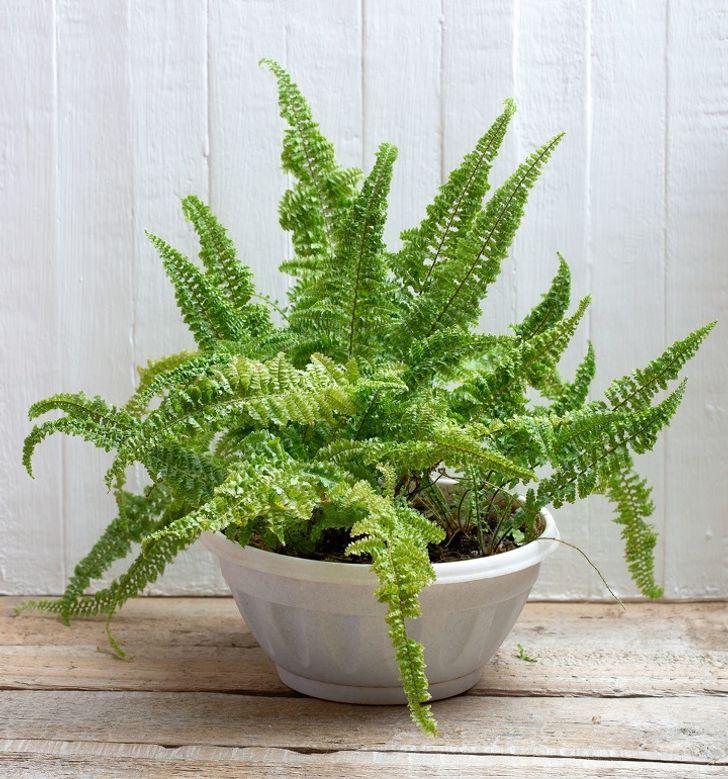 15 Plantas de interior que trazem boas energias e são ótimas para a saúde