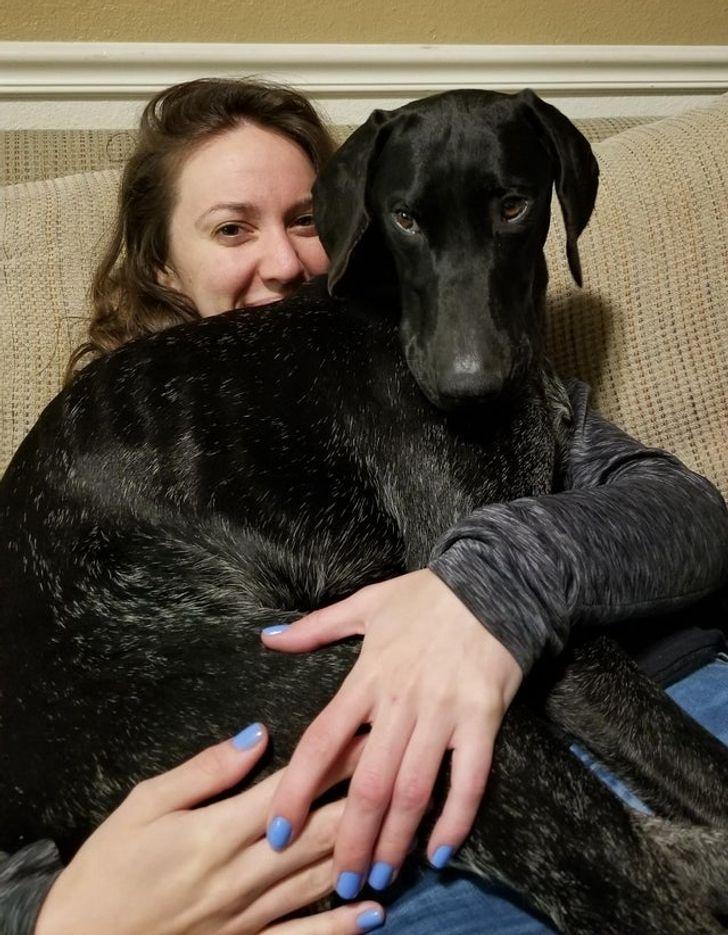 17 Animais de estimação que não deixam seus donos sozinhos nem por um segundo