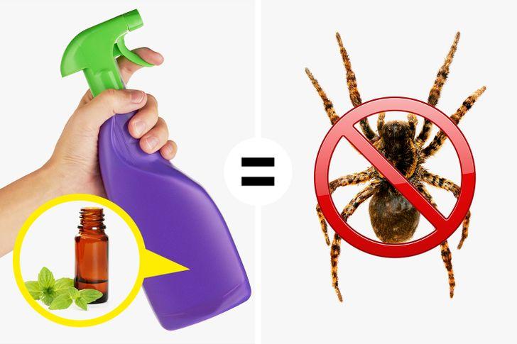 9 Maneiras de manter aranhas e insetos longe da sua casa