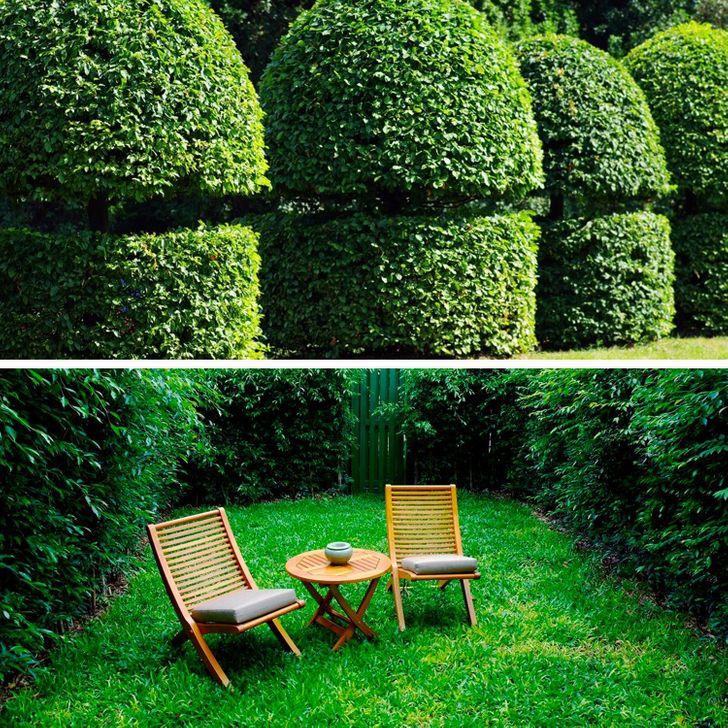 12 Ideias para ganhar privacidade e ao mesmo tempo decorar seu jardim