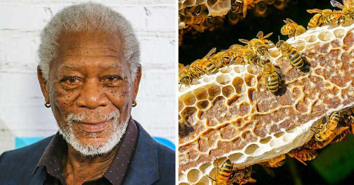 Morgan Freeman fez da sua fazenda de 50 hectares um santuário de abelhas para salvar o planeta