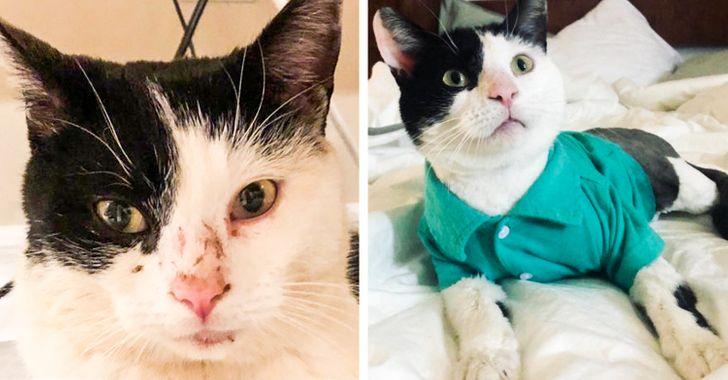 25+ Animais que ganharam uma nova vida após a adoção