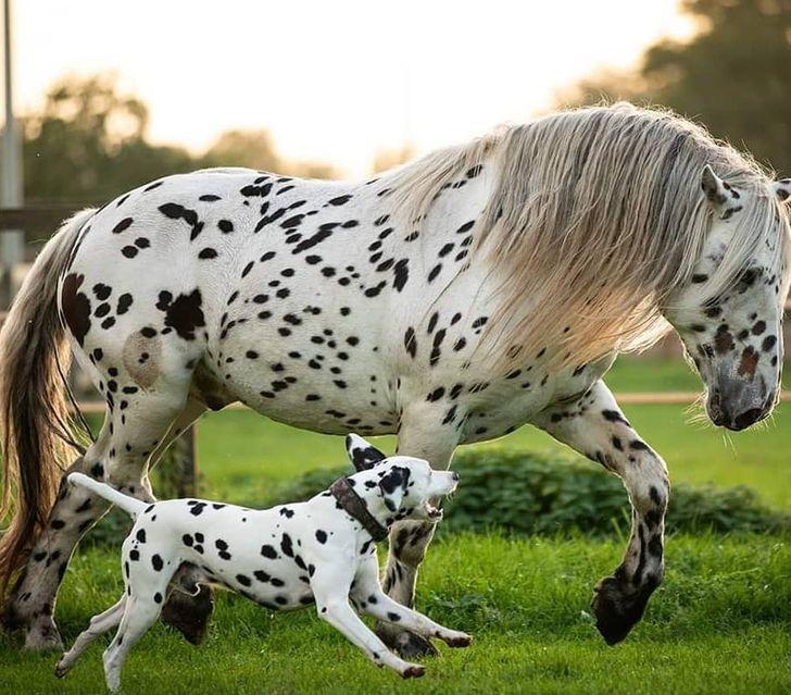 15 Animais que foram especialmente agraciados pela Mãe Natureza