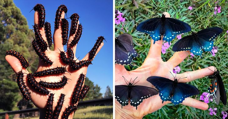 Jovem repovoa São Francisco com borboletas raras apartir deseu jardim