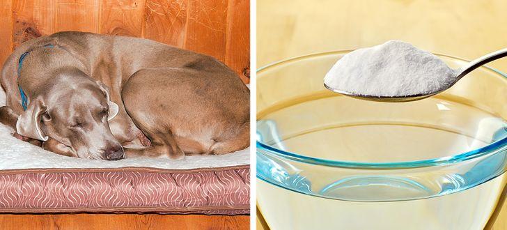 11 Truques para acabar com os maus odores produzidos por seu pet