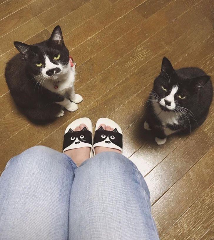 20+ Casos provando que são os gatos que dominam os seres humanos (e não o contrário)