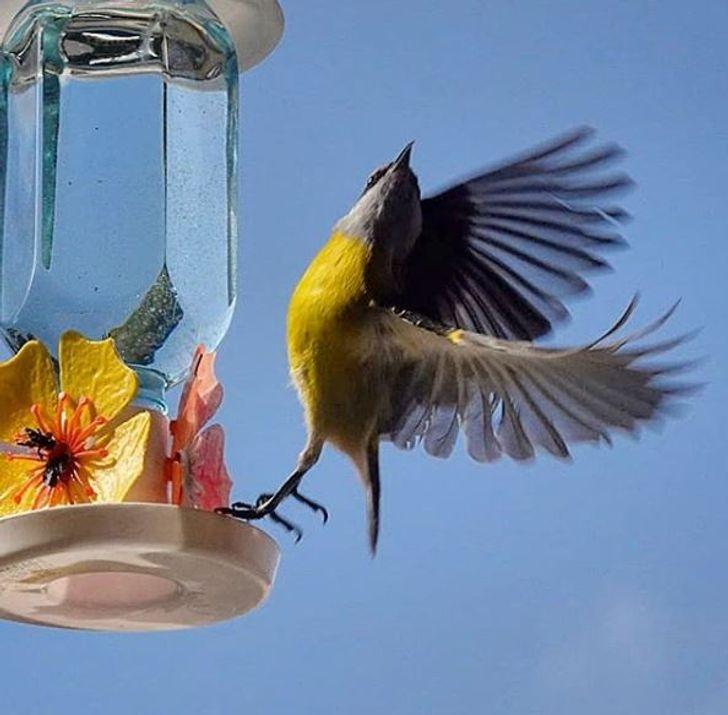25+ Imagens incríveis de aves em pleno voo mostram que a natureza tem criatividade para dar e vender