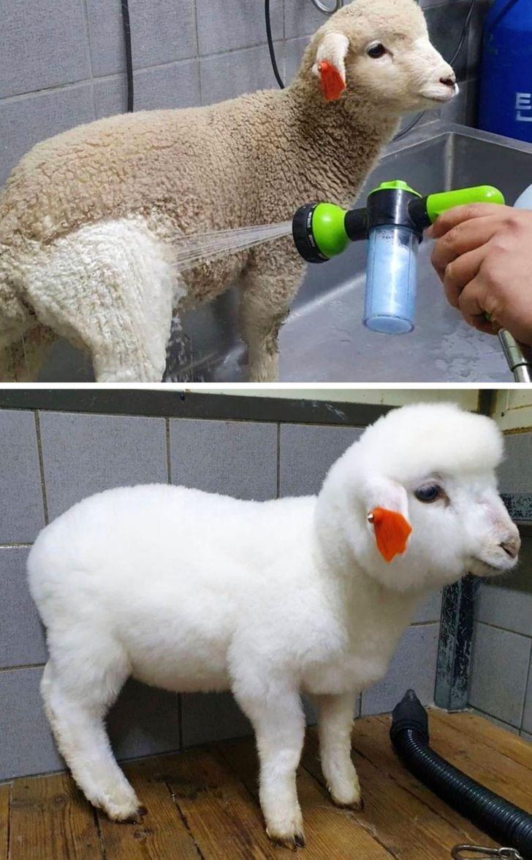 20 Transformações incríveis que provam que uma limpeza bem feita pode dar uma nova vida a qualquer coisa (ou a qualquer animal)