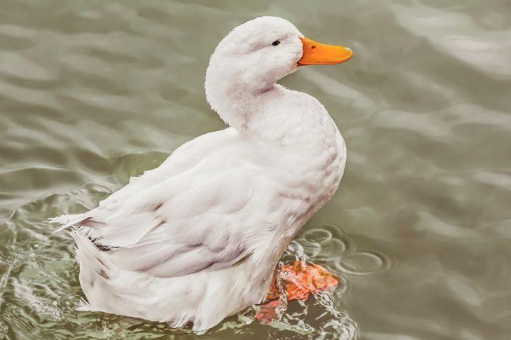 Conheça 15 belas aves que vivem no Planeta, antes que algumas desapareçam