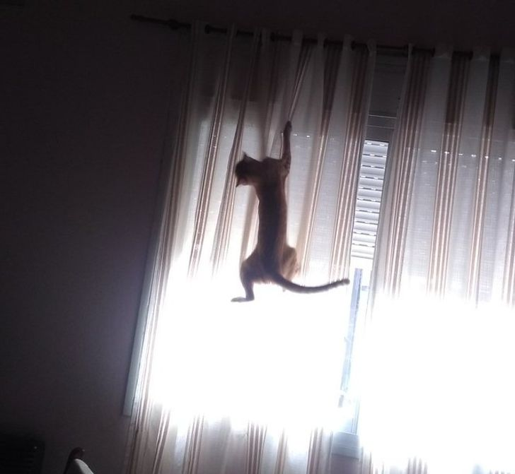 20+ Usuários compartilham fotos diárias de seus gatos, mostrando que são a definição clara do que é ser uma alma livre