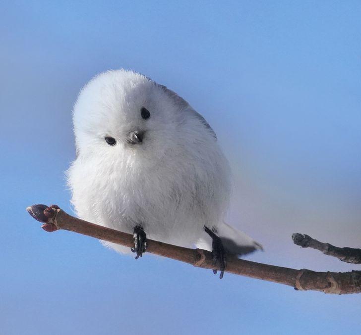 15+ Pássaros únicos que vão deixar você impressionado com tanta beleza
