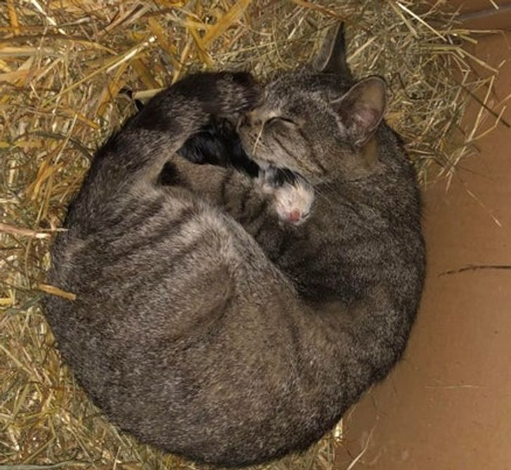 20+ Animais bebês que gostam de ficar o mais perto possível de suas mamães