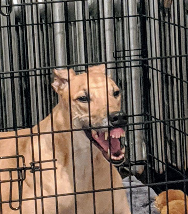 20+ Cachorros com hábitos peculiares