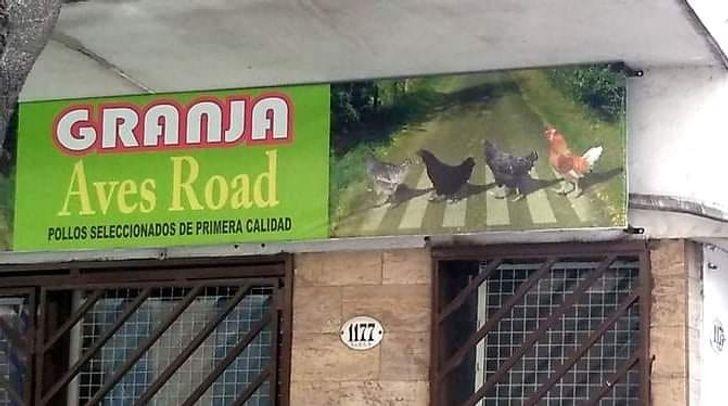 19 Placas e cartazes muito engraçados e estrelados por animais