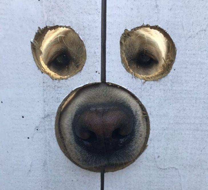 20+ Provas de que a vida sem cachorros seria entediante