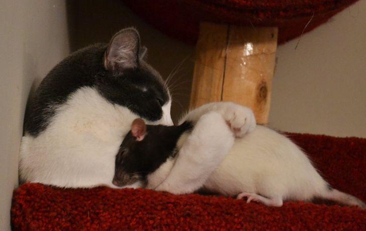 20 Fotos de animais dormindo que são capazes de nos encher de alegria