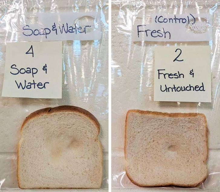 Uma professora fez um experimento incrível com seus alunos que mostra a importância de lavar as mãos