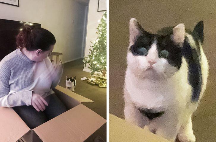 18 Hábitos de gatos que todo mundo adora (às vezes, nem tanto)