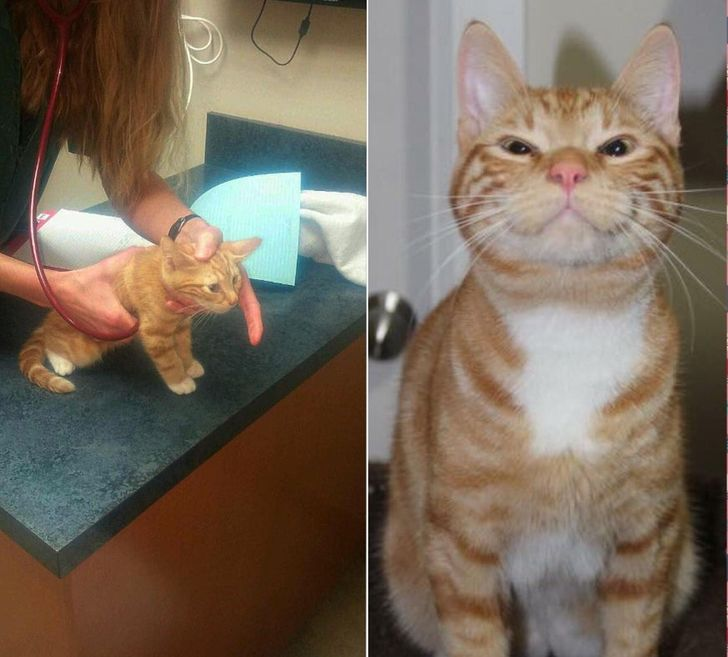 20+ Antes e depois de animais que passaram por mudanças radicais