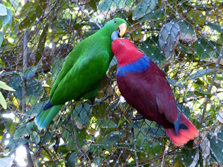 14 Provas de que os papagaios estão entre os animais mais inteligentes e adoráveis