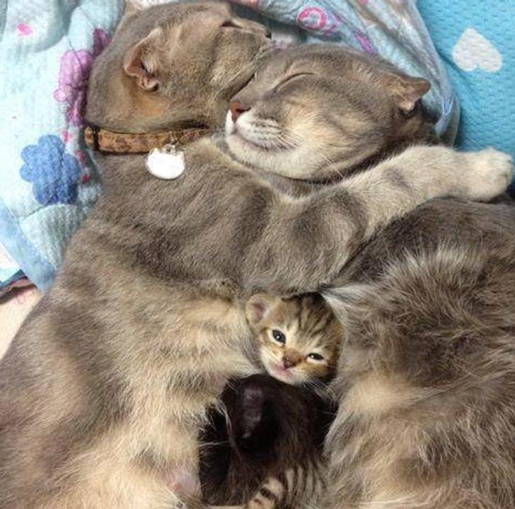 20 Animais que mostram o quanto a família é o que há de mais importante no mundo